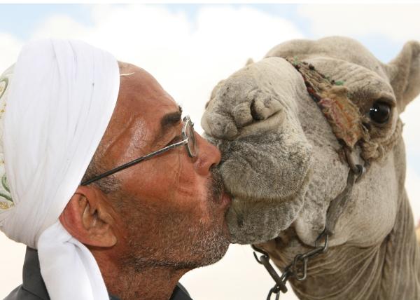 camel-kiss-cute-funny