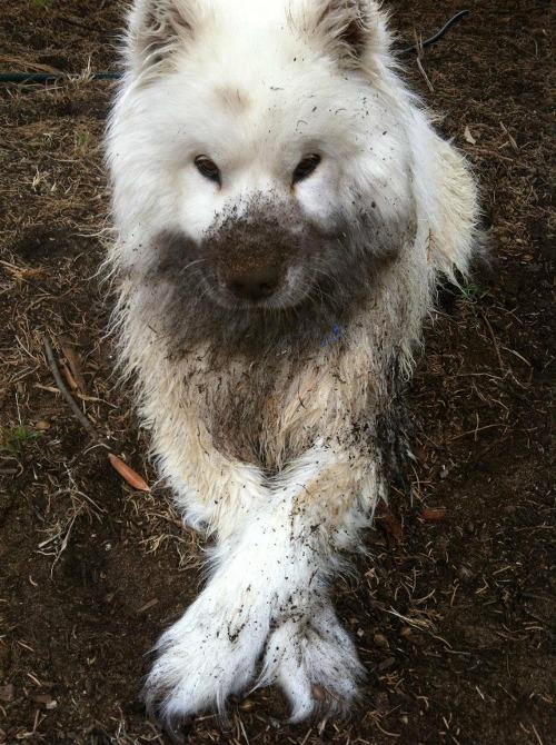 dog-cute-funny-dirty