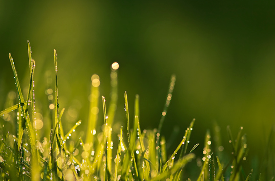 grass-dew-morning-sunny-light