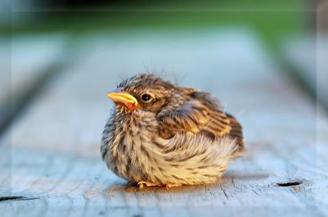 baby-bird-030