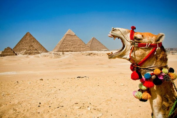 camel-funny-pyramids-wednesday-hump-day
