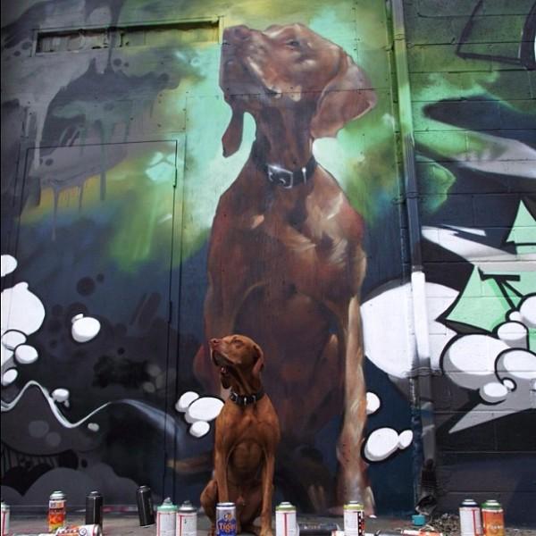 dog-model-vizla