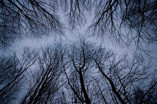bare-trees-dusk-morning