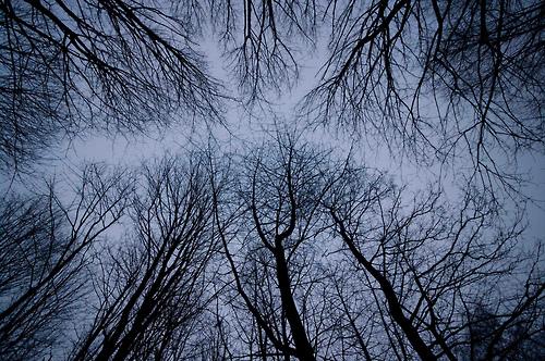 bare-trees-dusk-morning