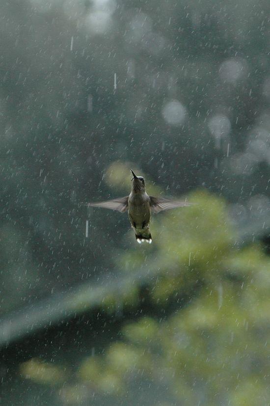 bird-fly-rain