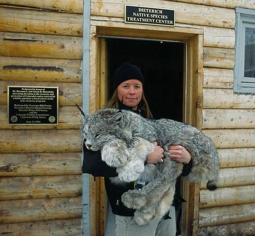 lynx-cat-paws
