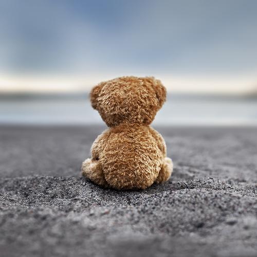 teddy-bear-cute-adorable