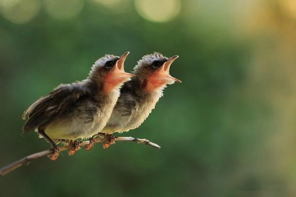 birds-morning-wake-up
