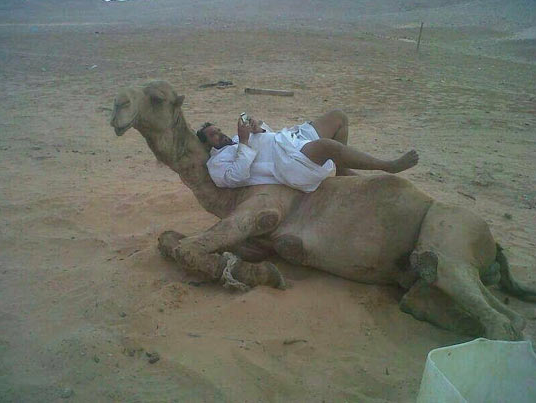 camel-wednesday-hump-day-funny