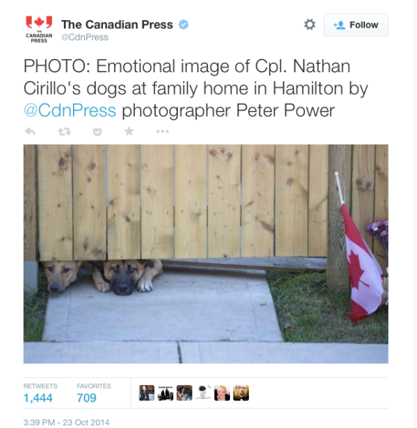 cpl-cirillo-dogs