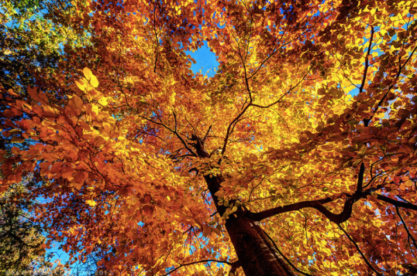 fall-autumn-tree-color