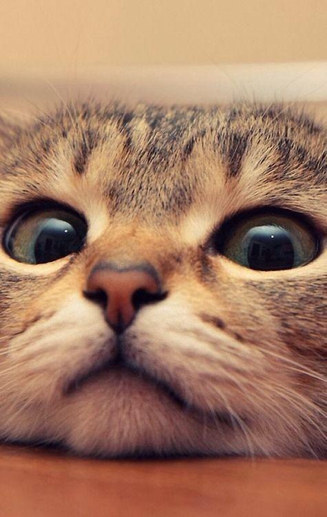 kitten-cute-eyes-funny-adorable