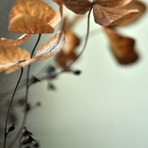 fall-autumn-leaves