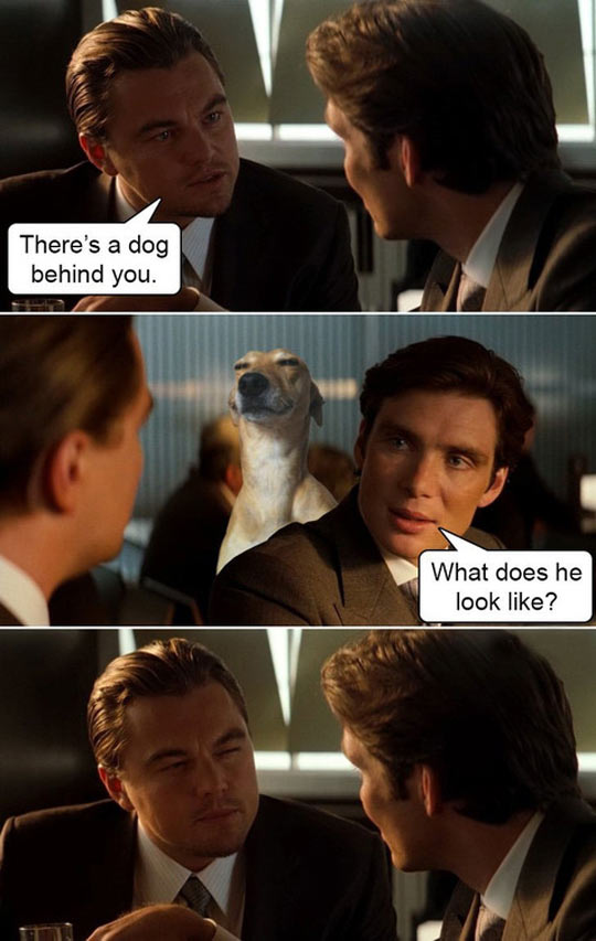 funny-Inception-dog-Leo-DiCaprio-eyes