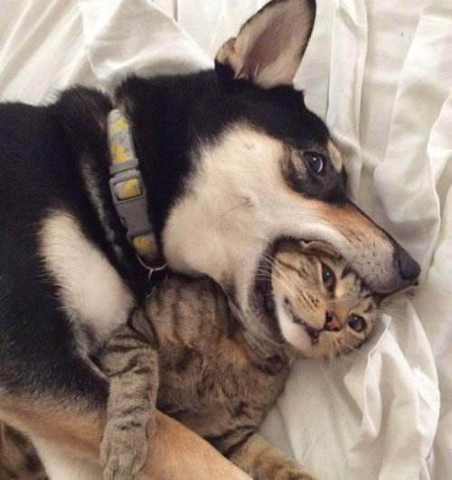 dog-pet-cute-cat-funny-tgif