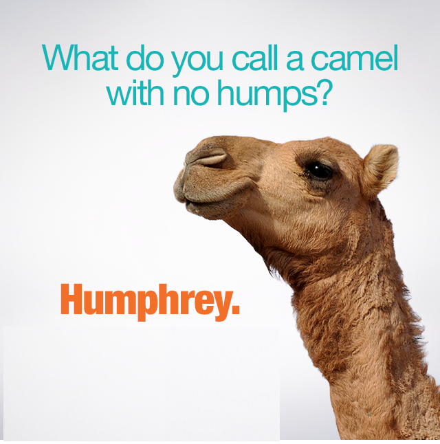 Funny Wednesday Hump Day Camel