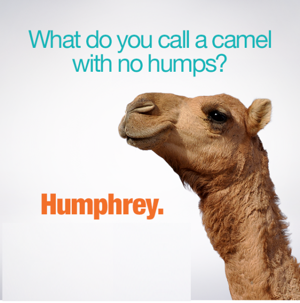 Wednesday camel hump day images