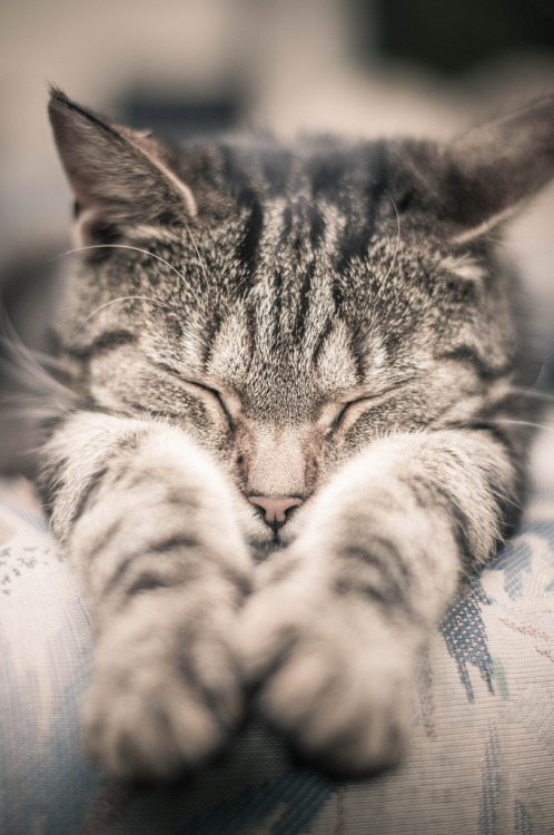 cat-kitten-pet-sleep-cute-adorable
