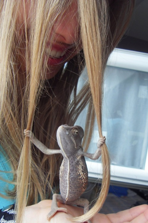 chameleon-cute-hair