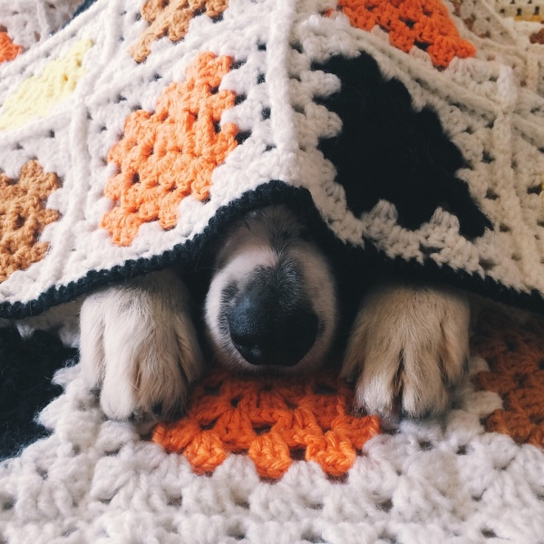 dog-cute-sleeping-peek-adorable-pet