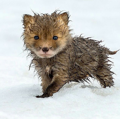winter-fox-cute-adorable