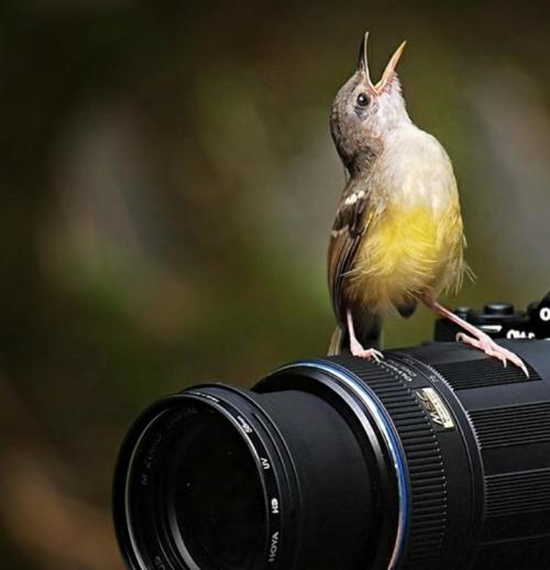 bird-sing-camera
