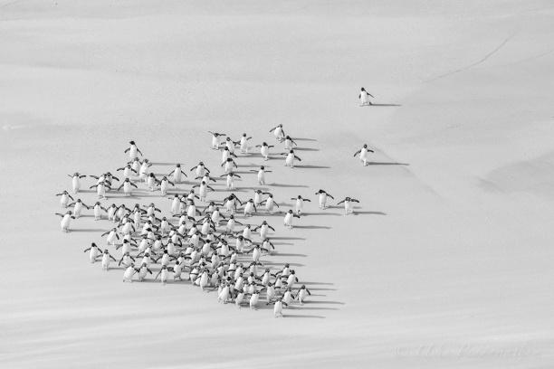 penguins-run-TGIF