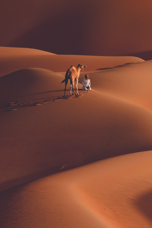 camel-desert
