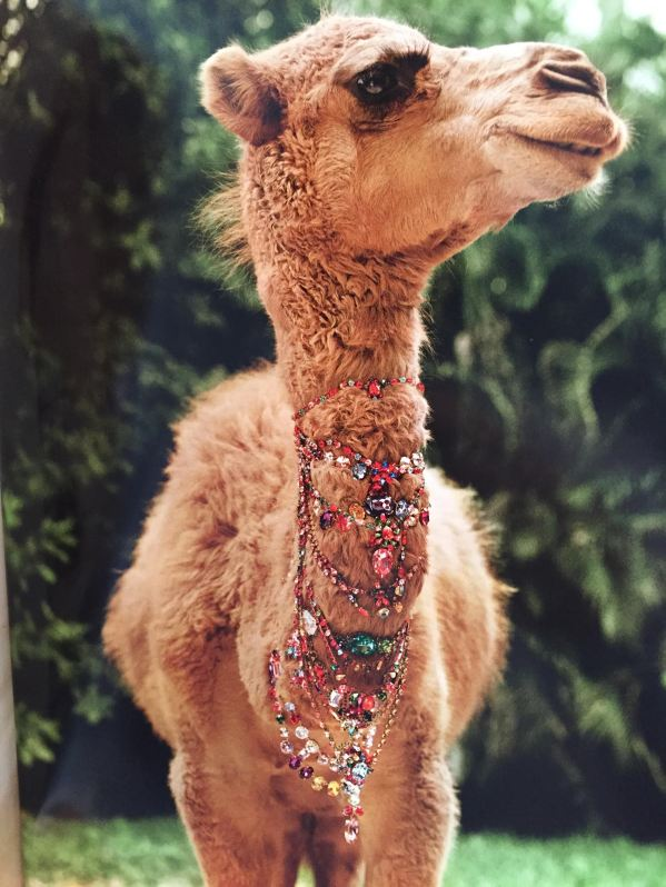 camel-hump-day-funny-bling