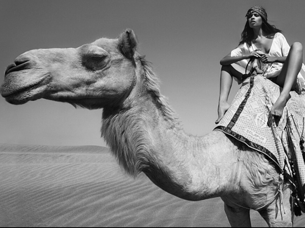 camel-hump-day-wednesday-black-and-white