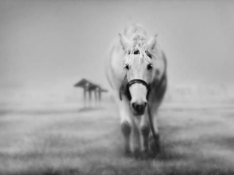 dreamy_horse-480x360