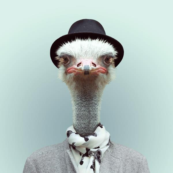 ostrich-funny-TGIF