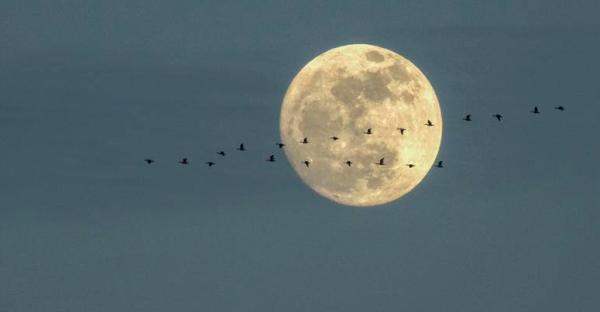 moon-birds-migration