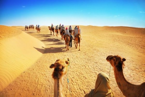 camel-sahara-hump-day-wednesday