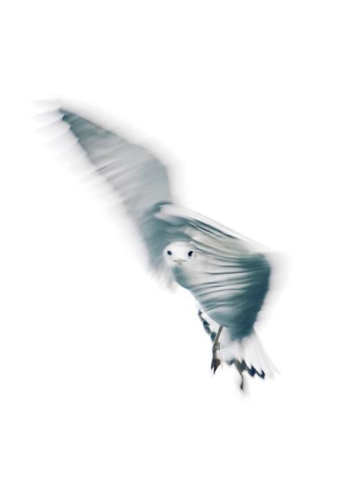 dreamy-sea-gull-fly