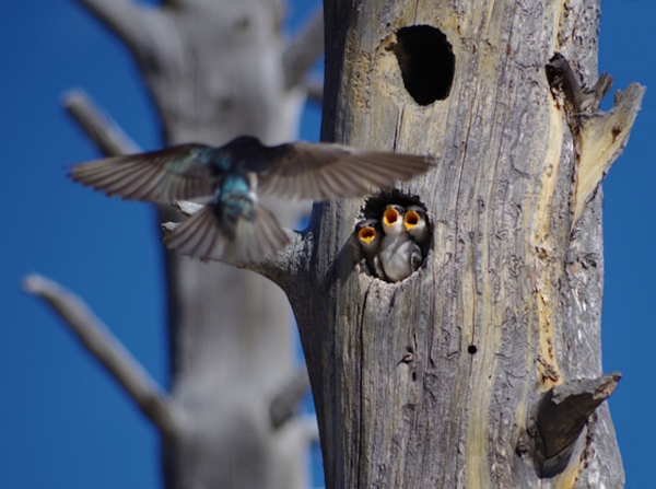 Koustav-Maity-birds-cute-baby