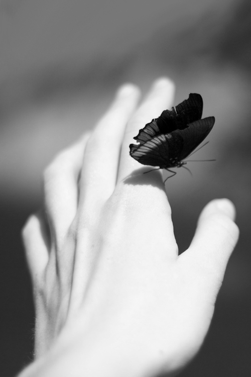 butterfly-hand-black-and-white