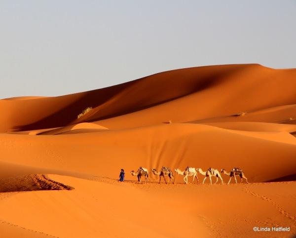 linda-hatfield-camel-desert