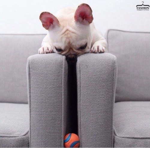 tgif-t.g.i.f.-funny-friday-puppy-pet-dog