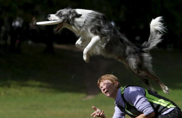 dog-frisbee-jump