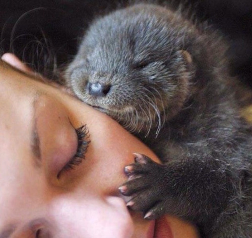 otter-cute-adorable-sleep