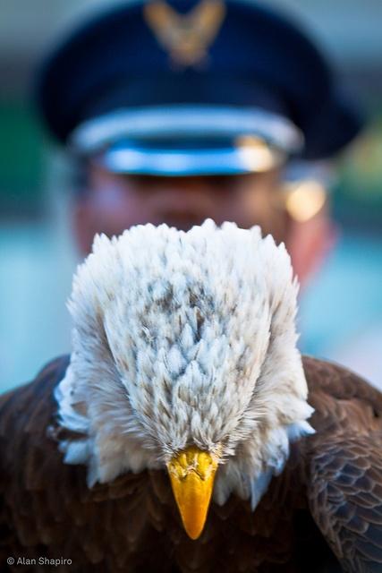 eagle-veterans-day-honor