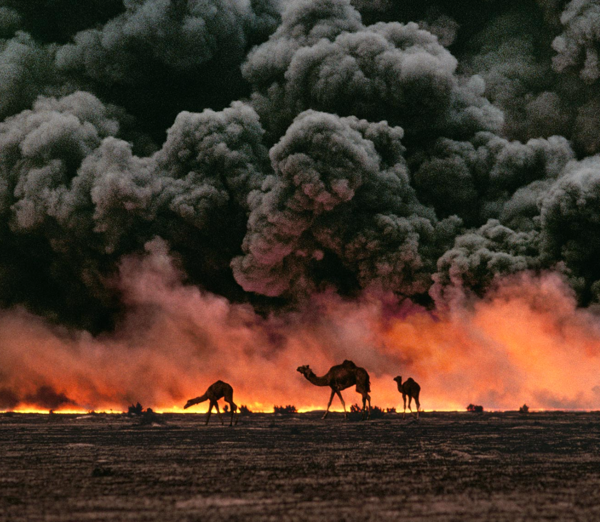 camels,Kuwait,Ahmadi Oil Fields,war