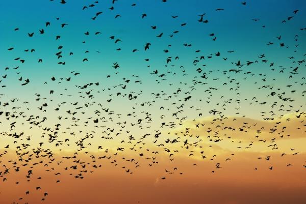 birds-sun-light