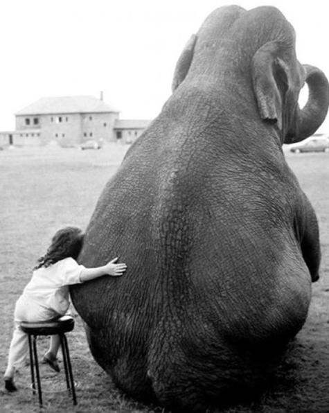 elephant-sit-child-girl-cute