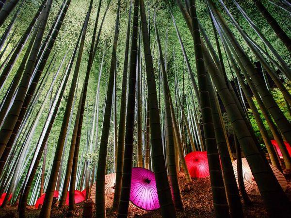 trees-woods-light-umbrella