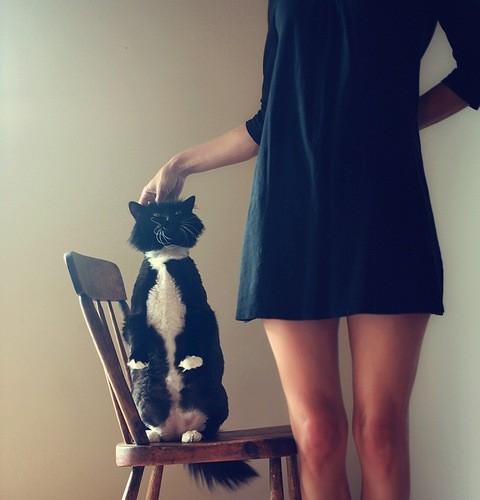 cat-pet-cute-adorable