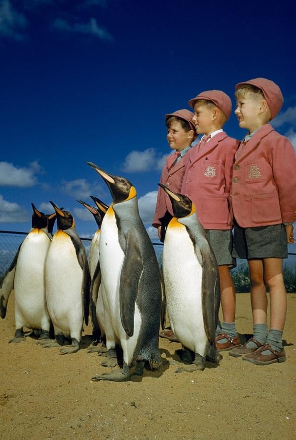natgeo-penguins-school-boys-attention
