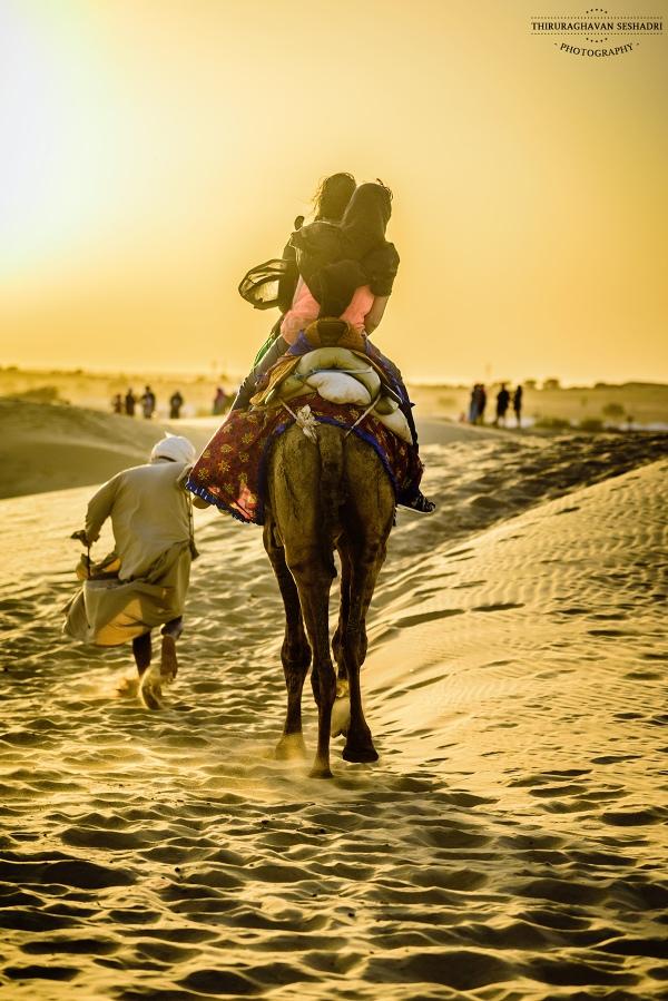 camel-hump-day-wednesday-caleb-2