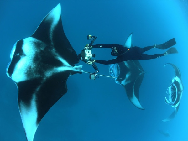 manta-ray-Ted-talks-thomas-peschak